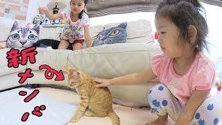 ●普段遊び●HIMAWARIちゃんねる新メンバー!まーちゃん【5歳】おーちゃん【2歳】HIMAWARI channel new members!