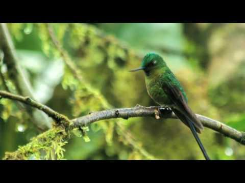 Escuchar los colores - Juan Pablo Culasso explora el mundo de Mashpi