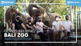 Program Baru Bali Zoo, Berikan Pengalaman Gowes Mengelilingi Kebun Binatang