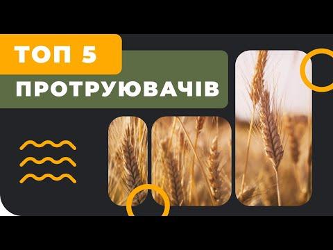 Топ 5 протравителей озимой пшеницы