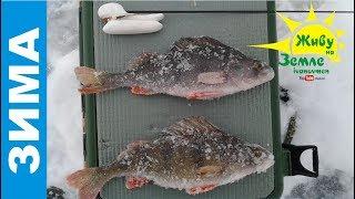 Тактика ловли при плохом клеве рыбы. Видео с рыбалки, картинка с рыбой оттуда же.