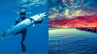 Акулы Балтийского моря: чем опасны?