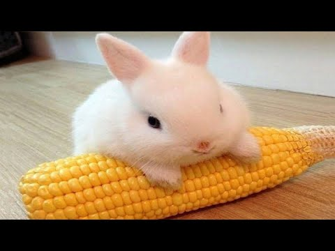 , title : 'Funny and Cute Baby Bunny Rabbit Videos - Baby Animal Video Compilation (2019)