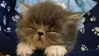 Домашние Животные, Спящий котенок
