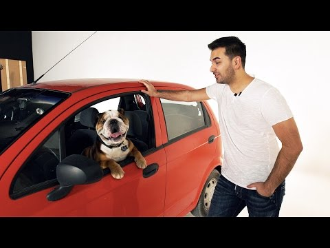 Animals and Cars - SellAnyCar.com ad