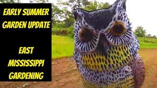 Early Summer Garden Update | East Mississippi Gardening