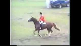video of Dinard L