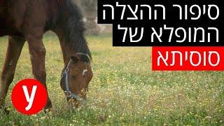 מבצע ההצלה של הסוסה סוסיתא