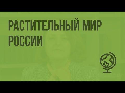 Растительный мир России. Видеоурок по географии 8 класс