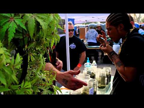 High Times Cannabis Cup with Kalico Fortycal Medifaded