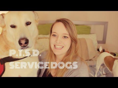 SERVICE DOGS & PTSD! - YouTube