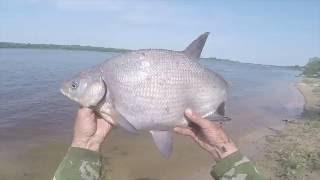 Ловля леща на донку, видео rybachil.ru