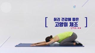 [허리운동] 허리 건강에 좋은 운동 고양이 스트레칭