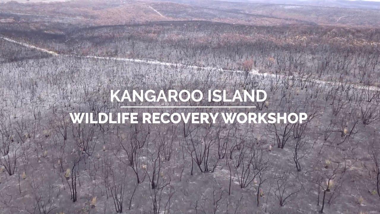 Kangaroo Island Post-fire Wildlife Recovery Workshop