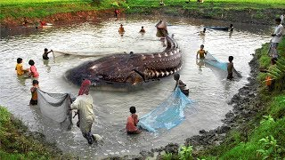 Face To Face With Epic Amazon River Monster