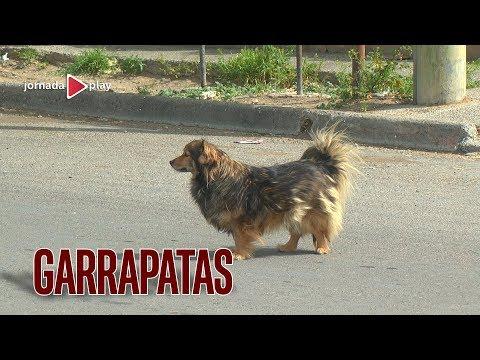 GARRAPATAS: El enemigo de perros y gatos pero también de las personas.