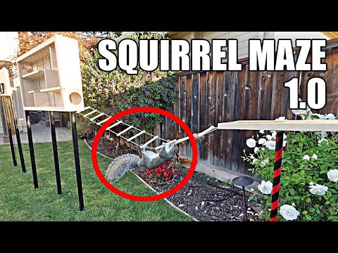 Building the Perfect Squirrel Proof Bird Feeder - Mark Rober