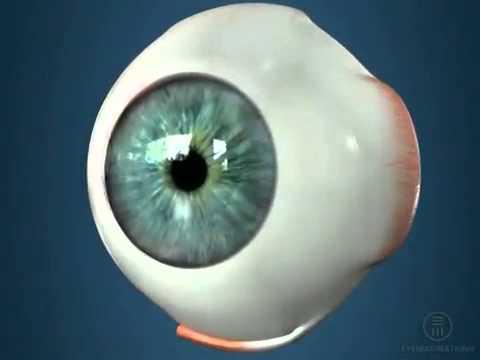 Лазерная коррекция зрения при близорукости при каком зрении делают
