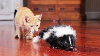 Смешные коты и котята фото 2019 - Смешные кошки МатроскинТВ