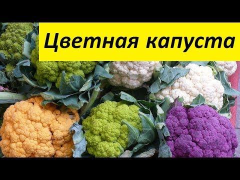 Цветная капуста - Здоровье Желудка