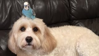 Meet The Unlikely Bird and Dog Duo Who Are Best Friends