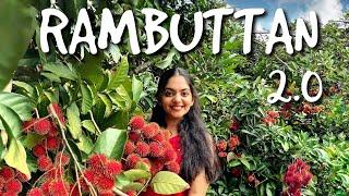 Rambuttan 2.0   Ahaana Krishna   Home Vlog