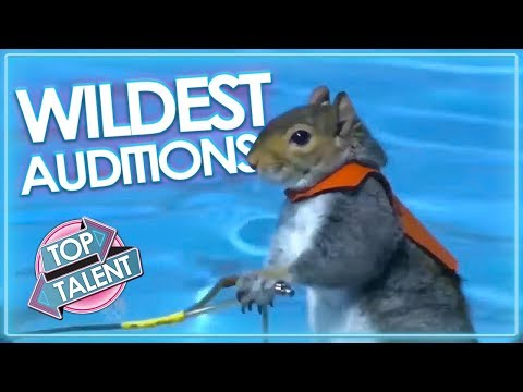 WILDEST ANIMAL Moments and Auditions On Got Talent! | Top Talent (видео)