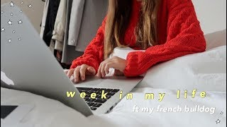 WEEK IN MY LIFE ⎪studying for IB exams