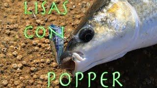 Como pescar lisas con Popper
