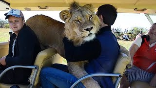 Taigan Lion Park - Where Lions Hug Tourist