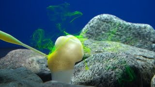 Newswise:Video Embedded climate-change-an-imminent-threat-to-glass-sponge-reefs