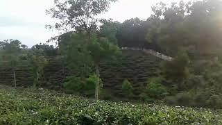 preview picture of video 'গ্রান্ড সুলতান হোটেল, শ্রীমঙ্গল, মৌলভীবাজার'