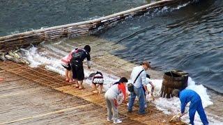 「大漁」大瀬観光やな栃木県茂木町
