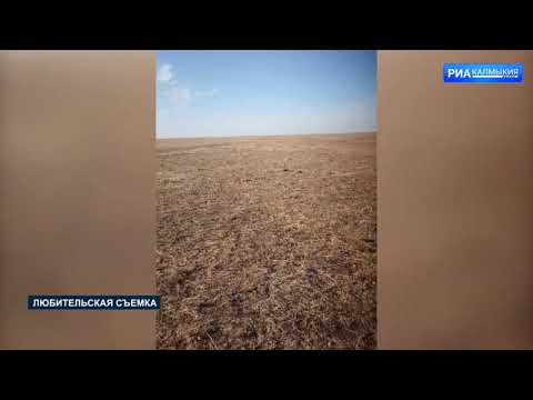 На территории Республики Калмыкия Управлением Россельхознадзора выявлено нарушение требований земельного законодательства