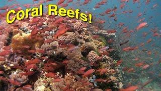 Coral Reef Biology | JONATHAN BIRDS BLUE WORLD