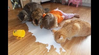 Funny Videos Fun with Cats. Funny Cats to Tears. Funny Animals 2019. # 15