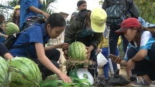 Tin Tức 24h: Hỗ trợ tiêu thụ dưa hấu giúp nông dân Quảng Ngãi