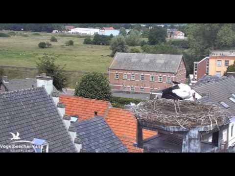 Ons nest - 10 juli 2017