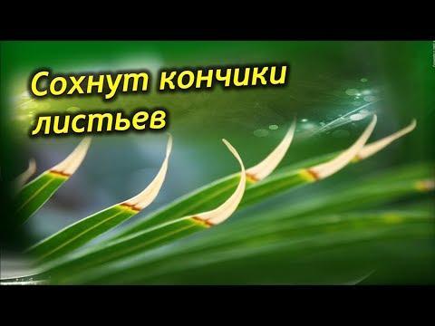 Текст песни пьеха счастье