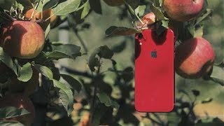 iPhone XR vs. XS: Which Apple Do You Pick?
