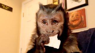 Monkey Strawberry VS Blueberry Taste Test!