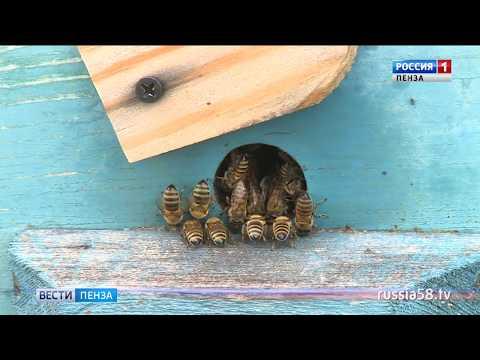 Пензенская область входит в 20-ку регионов РФ по развитию пчеловодства