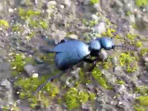 A zöldúti paraziták ellen