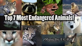Top 7 Most Endangered Animals