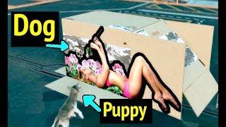 Puppy Reacts to Cardboard Box - Metal Gear Solid V: Phantom Pain (MGS5)