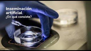 ¿Qué es una inseminación artificial? Clínicas de reproducción asistida IVI (España, UE, 2014) - IVI Reproducción Asistida
