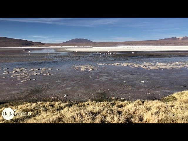 Abenteuer 100 Tage Südamerika: Flamingos in der Laguna Colorado