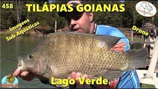As Tilápias Goianas no Lago Verde - Fishingtur na Tv 458