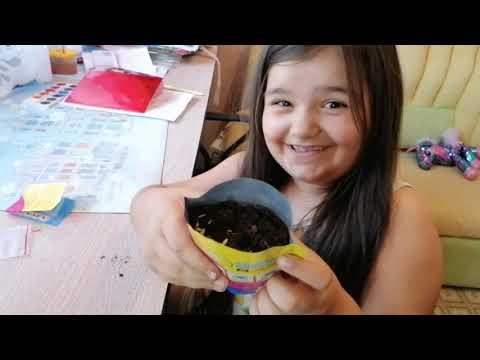 Миньон выращиваем волосы Миньону Миньону из магнита семена
