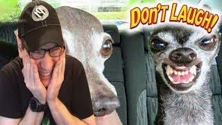 Try Not To Laugh Challenge: Funny Animals Edition #2